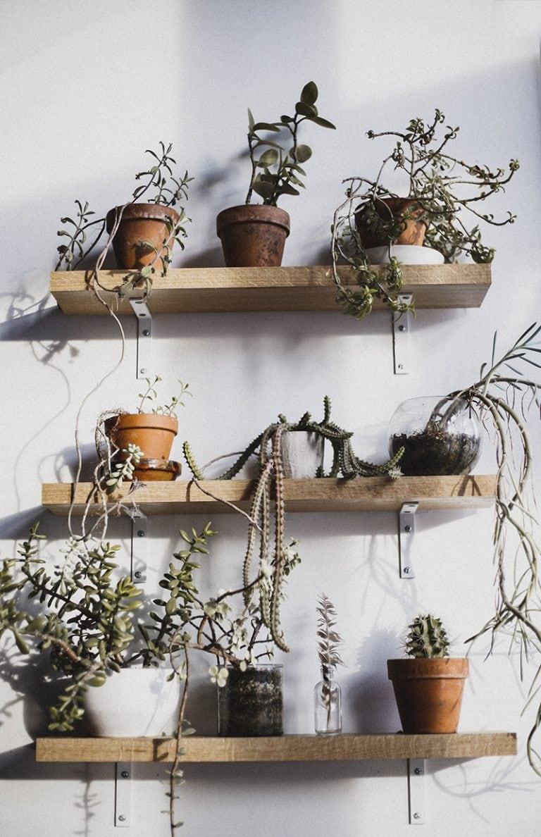 Pflanzen als Designobjekt